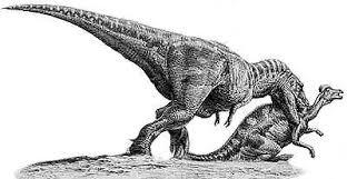 <b>Tyrannosaurus</b> | Natural History Museum