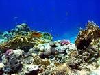 ...El color de la naturaleza... Images?q=tbn:ANd9GcRyK9P8poq5N94zRrRZlnAq4RQQa3QHVMRB9_6vmalLE138EBmBYZrQieA