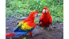 <b>Cage Birds</b>