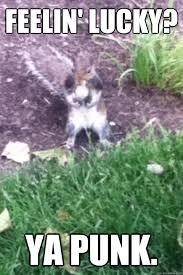 Short Tempered Squirrel memes   quickmeme via Relatably.com