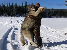 Comparação de  tamanho entre  animais  e   Seres humanos - Página 2 Images?q=tbn:ANd9GcRyskP47wEZAP7IJKOVwatWKvFeYIn6Xs8BDrDB7EGpVrnh-CAO