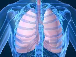 Resultado de imagen de lungs