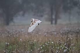 radley bird radley lakes habitats
