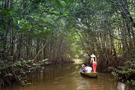 Image result for mangrove tour by bmr bali