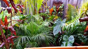 Small Picture Daniels tropical garden in AUSTRALIA Fine Gardening