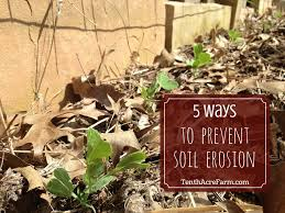 can edible gardening reduce deforestation tenth acre farm 5 ways to prevent soil erosion