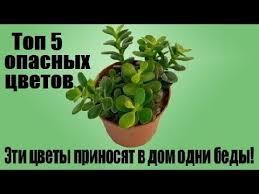 эти цветы приносят в дом одни беды, топ 5 опасных цветов в доме.