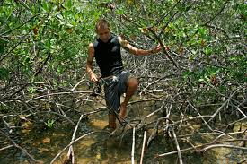 conservation of forest essay  www gxart orgconservation of forest essay jpg  marine photobank ocean in focus contest photo essayman walking in water through mangrove roots