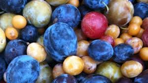 Image result for Tree Grows 40 Kinds of Fruit