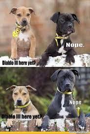 Dog Humor Funny Birthday Quotes. QuotesGram via Relatably.com