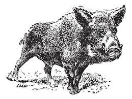Image result for vintage hog public domain