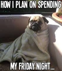 Funny Pug Dog Meme Pun LOL | Shaky | Pinterest | Funny Pugs, Dog ... via Relatably.com