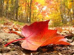 Image result for mùa thu vàng
