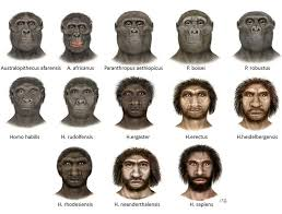 out of africa  human evolution and searching on pinterest