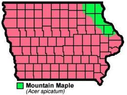 <b>Mountain Maple</b> | Natural Resource Stewardship