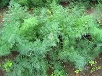 Купить <b>семена</b> зелени и пряностей в Краснодаре, сравнить цены ...