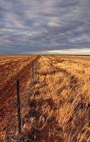 an essay on drought list the impacts of drought also list the drought on the hay plain