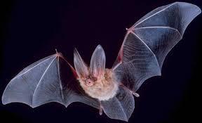 What <b>Is It</b> Like to Be <b>a</b> Bat? - Wikipedia