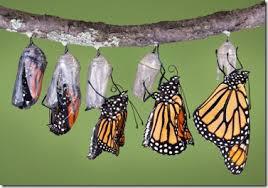Image result for ulat menjadi kupu-kupu