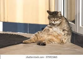 <b>Lazy Cat</b> High Res Stock Images | Shutterstock