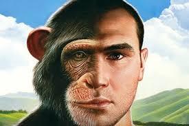 Simios y humanos