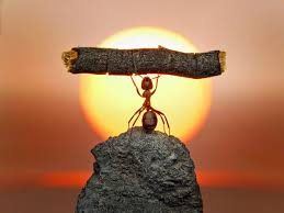 Image result for ant strength