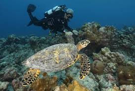 underwater exploration national geographic swimming wildlife in the seychelles