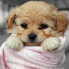 """Résultat de recherche d'images pour """"gif petit chien"""""""