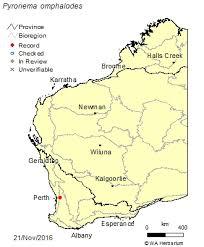 Pyronema omphalodes (Bull.) Fuckel: FloraBase: Flora of Western ...