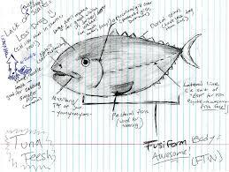 pelagic fish diagram by orcafinatic on deviantartpelagic fish diagram by orcafinatic