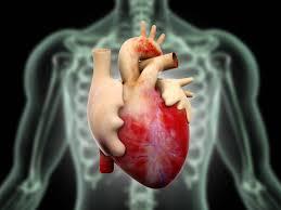 Image result for first heart transplantation