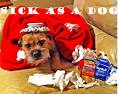 Images & Illustrations of sick as a dog