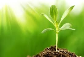 Image result for بافت شناسی در گیاهان