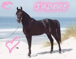 """Résultat de recherche d'images pour """"image de chevaux"""""""