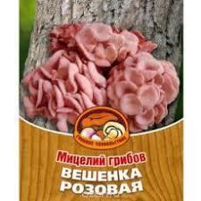Купить <b>Мицелий грибов</b> - Алматы, Казахстан