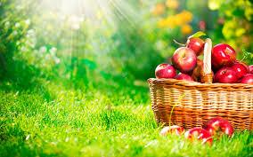 Картинки по запросу скачать картинку  фрукты