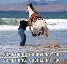 Funny horse pictures | Funny Dirty Adult Jokes, Memes & Pictures via Relatably.com