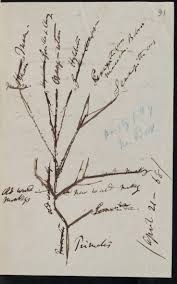 best images about charles darwin museums amnhnyc ldquo the darwin manuscripts project at the museum is currently digitizing the entirety of charles darwin s evolution manuscripts some pages of