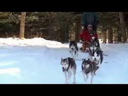 Eye on the Iditarod - <b>Aisling's</b> Quest