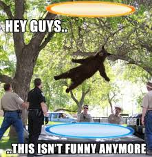 Best Of The 'Falling Bear' Meme | SMOSH via Relatably.com