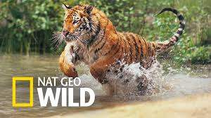 wildlife protection in essay for kids short essay on wild life protection worlds largest