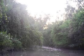 essay on natural vegetation of