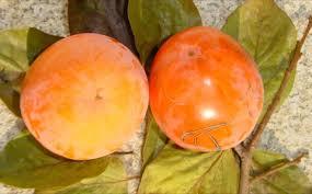 acheter kaki - plaqueminier - diospyros kaki - pépinière du bosc - acheter arbre plant variété tipo