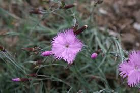 Busch-Nelke – Wikipedia