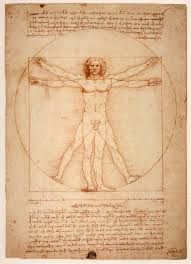 Image result for Golden ratio human
