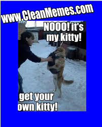 Clean Cat Memes - clean grumpy cat memes , clean cat memes with ... via Relatably.com