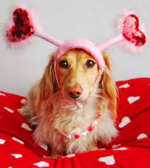 Image result for valentine's day dogs
