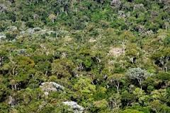 Proprietários rurais de Santa Catarina estão desobrigados a fazer a averbação de reserva legal junto aos cartórios de imóveis