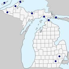 Hieracium lachenalii - Michigan Flora