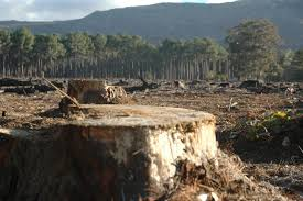 war on drugs in u s partly to blame for deforestation of central war on drugs in u s partly to blame for deforestation of central american rainforests acircmiddot guardian liberty voice
